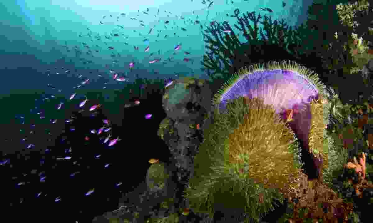 Milne Bay (Nigel Wade)
