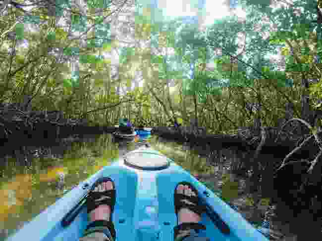 On the water, in search of Florida's manatees (Phoebe Smith)