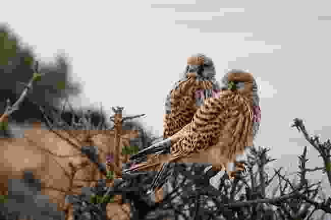 Birdwatching in Sagres (Shutterstock)