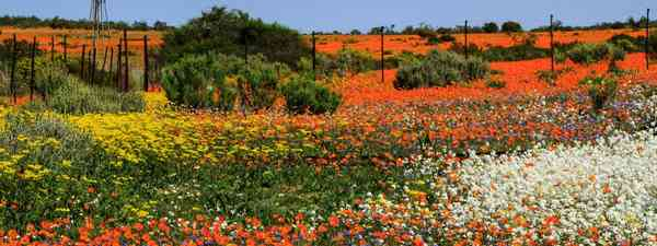 The most colourful spring scenes from around the world (Shutterstock)