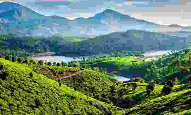 Emerald green tea plantations in Munnar (Shutterstock)