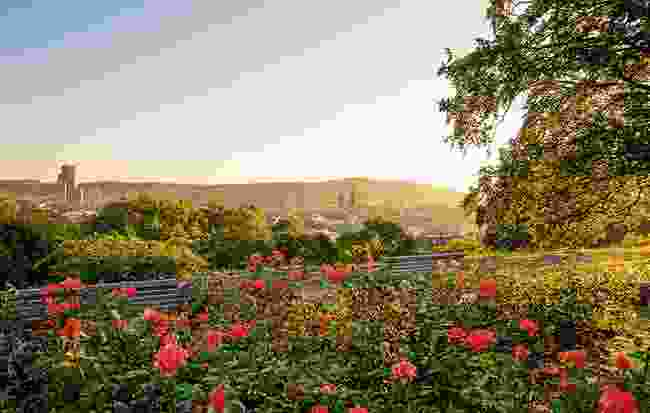 Winterthur's Rosengarten include historic types such as the French rose (Switzerland Tourism)