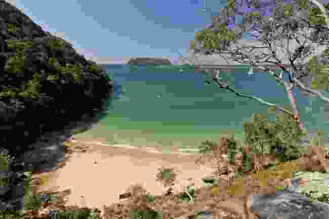 Resolute Beach, Ku-Ring-Gai Chase National Park (Andrew Gregory/Destination NSW)