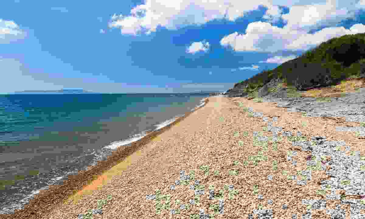 Ringstead Bay (Dreamstime)