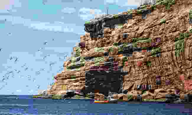 Cliffs of Bonaventure Island (Dreamstime)
