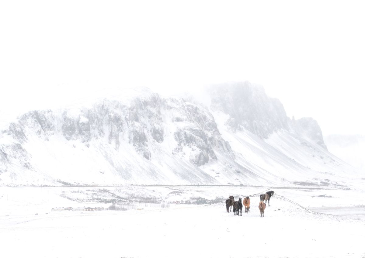 Early spring, Iceland  (Pawel Kamionka)