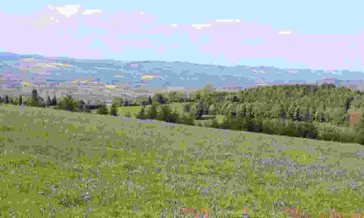 Bluebells near the top of High Vinnalls (Hannah Mackley)