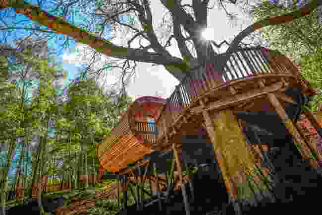 The curved lines of the treehouse at Fish Hotel (The Fish Hotel)