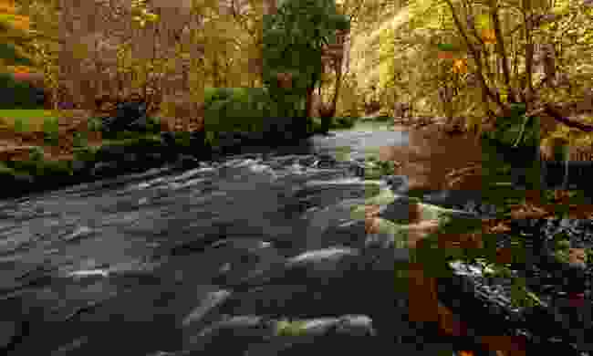 The Teign River in autumn (Shutterstock)