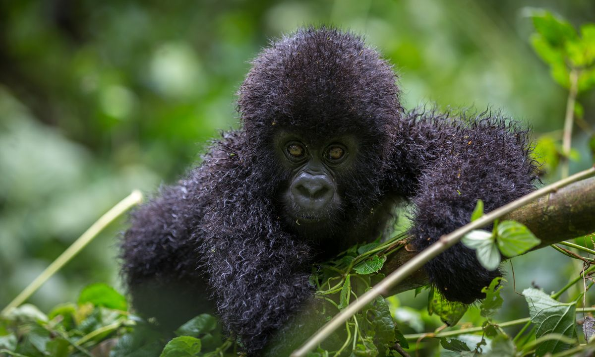 9 Unusual Tours Through Undiscovered Africa for 2020/2021