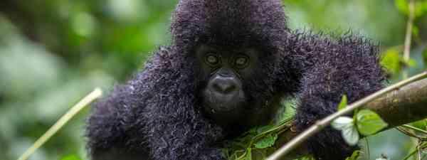 Little-visited Africa (Shutterstock)