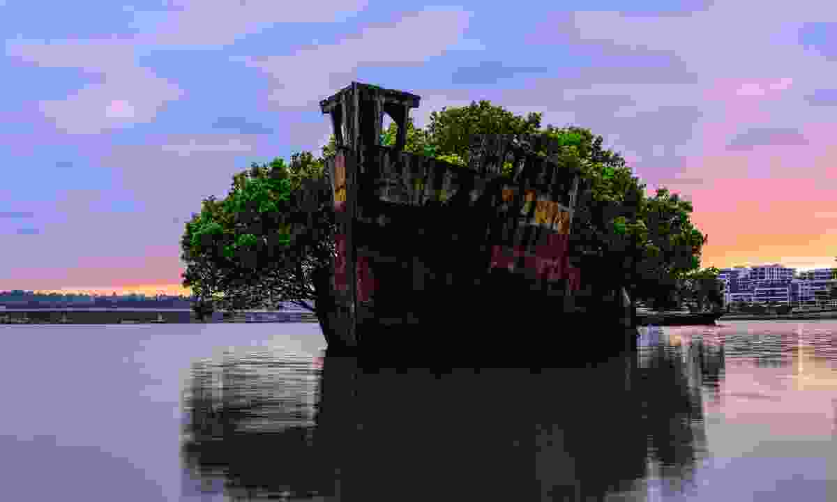 The abandoned SS Ayrfield is now a floating forest (Shutterstock)