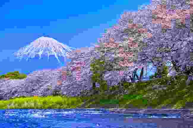 Cherry trees blooming along the Urui River near Mount Fuji (Shutterstock)
