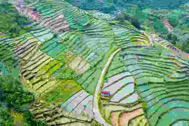 The terraced fields of Dieng Plateau (Shutterstock)