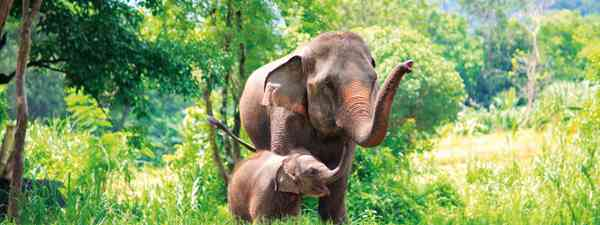 See Elephants at Elephant Hills in Thailand
