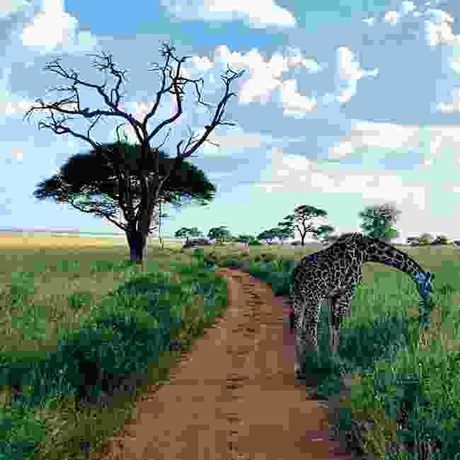 Olivia is dreaming of the Serengeti (Olivia O'Sullivan)