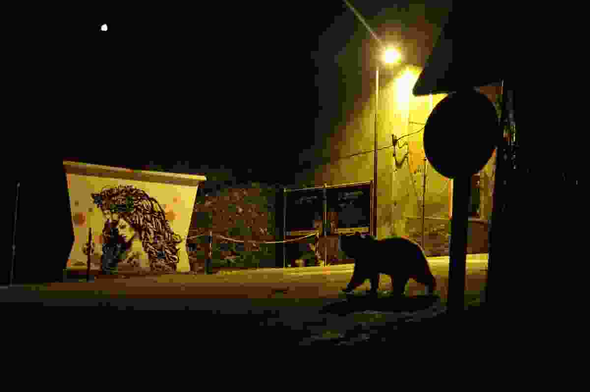 Winner of Urban Wildlife category: 'Crossing paths' (Marco Colombo, Italy)