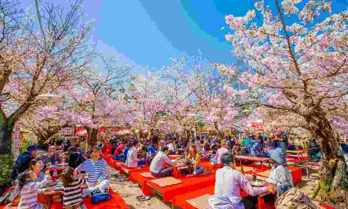Celebrating spring at Maruyana-Koen Park (Shutterstock)