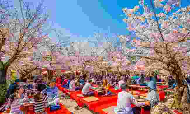 Celebrating spring at Maruyana-Koen Park (Shutterstock)