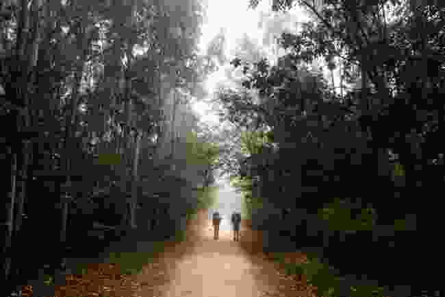 Pilgrims walking beneath eucalyptus trees on the Camino de Santiago (Shutterstock)