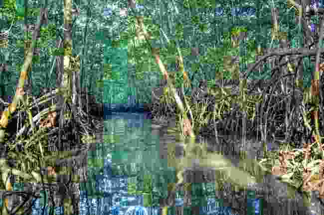 Mangroves in Costa Rica (Shutterstock)