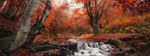 Autumn colours in New England (Dreamstime)