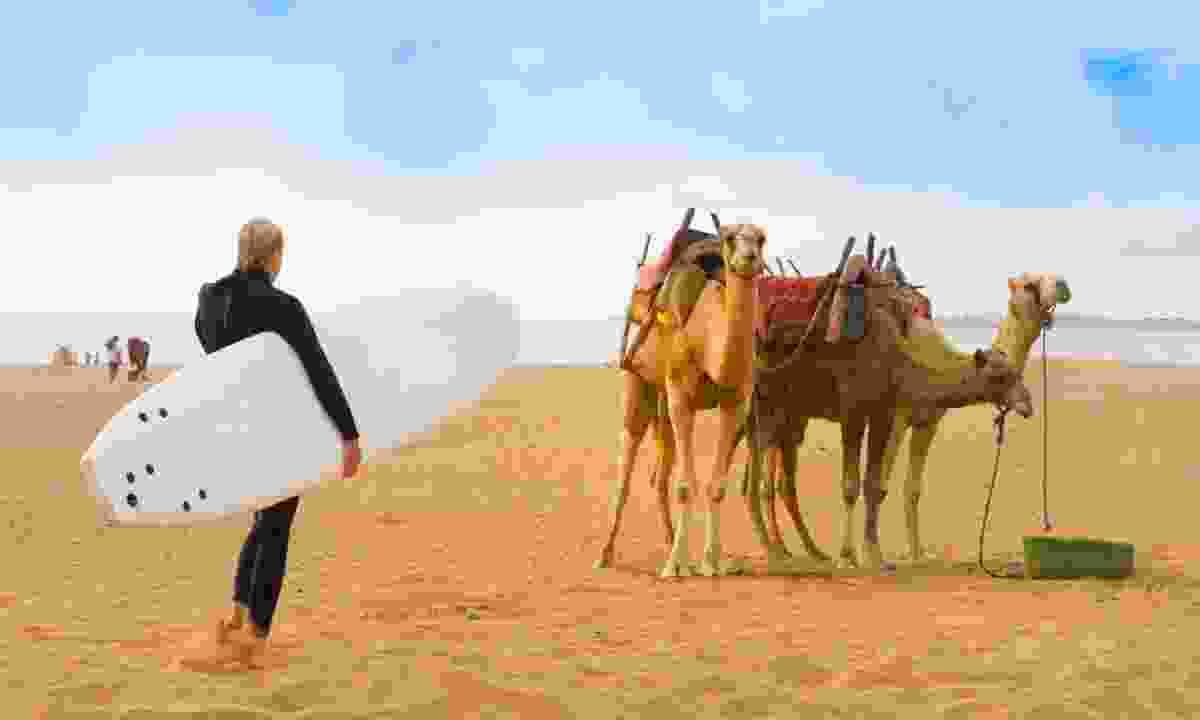 Camels on beach in Essaouira (Shutterstock)