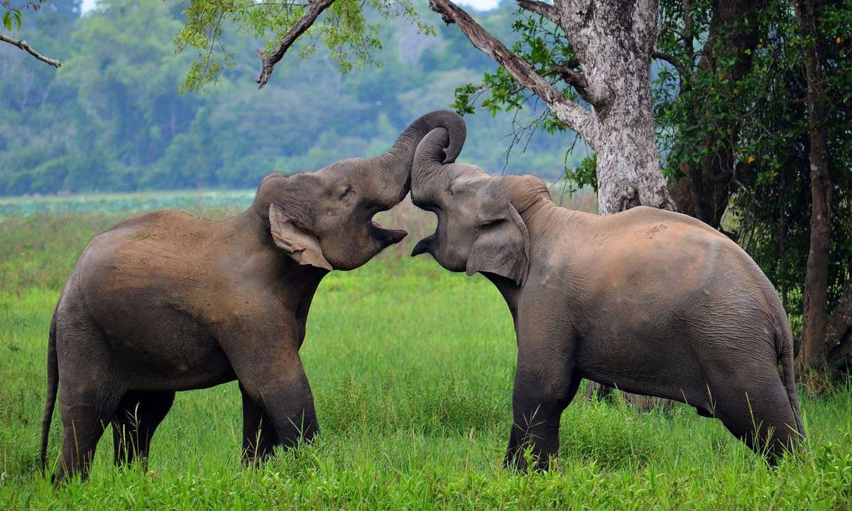 Elephants in Wasgamuwa National Park (Dreamstime)