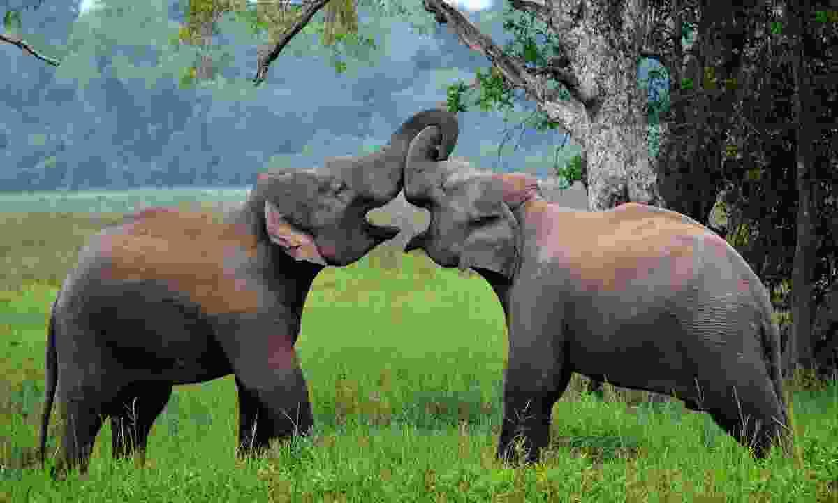 Elephants in Wasgamuwa National Park (Dreamstime)