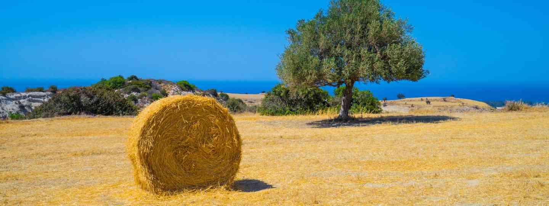 A rural scene in Cyprus (Dreamstime)