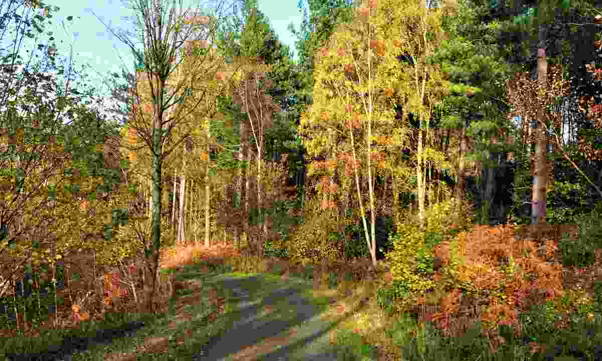 Autumn foliage at Gibside (Shutterstock)