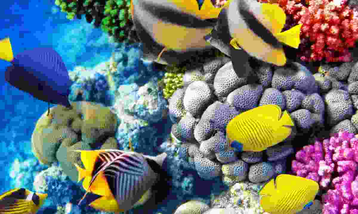Coral and tropical fish in the Red Sea (Shutterstock)