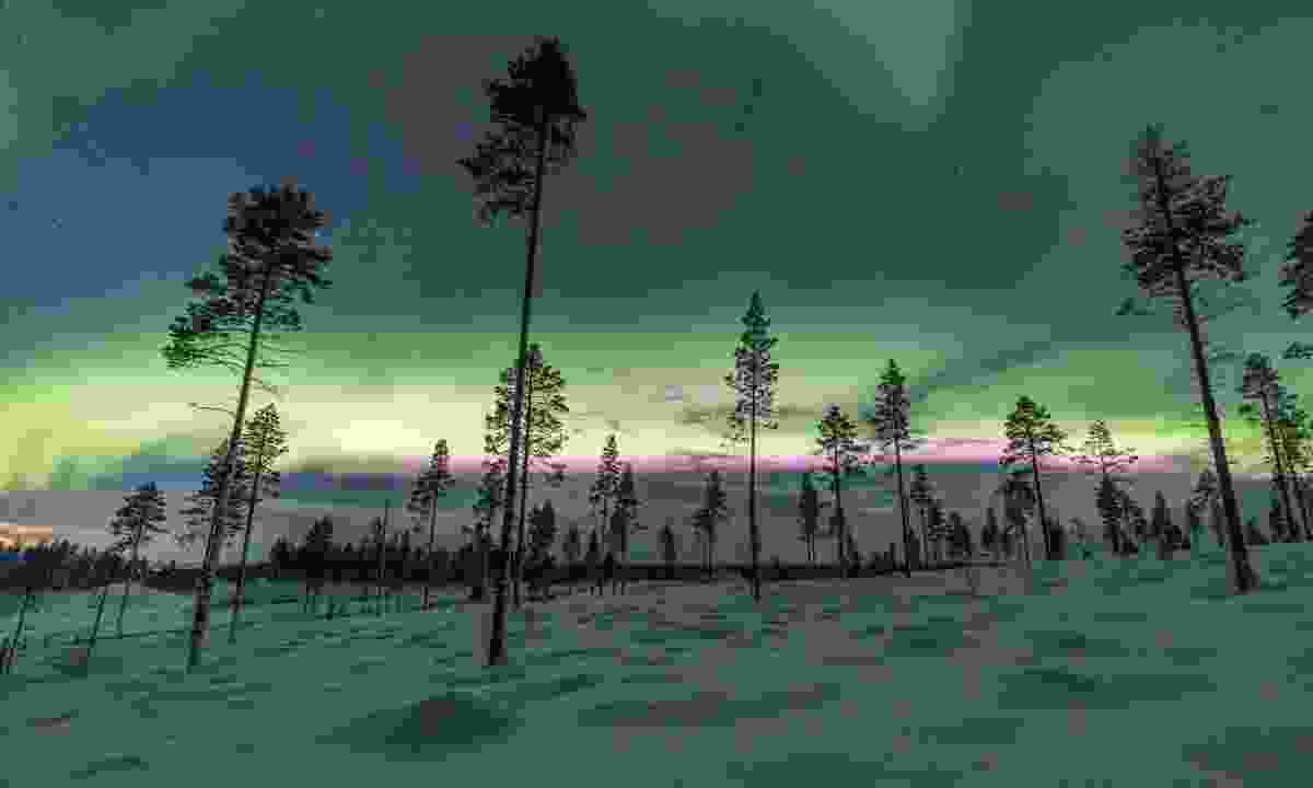 Finland forest (Dreamstime)