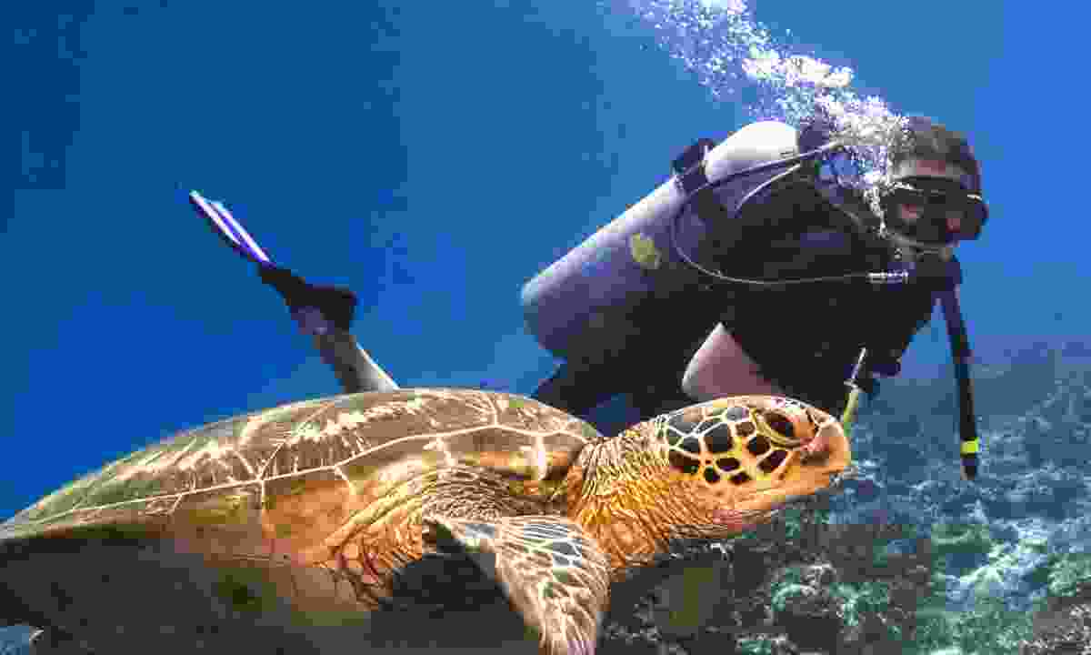 Diving among turtles in Sipadan, Borneo (Dreamstime)
