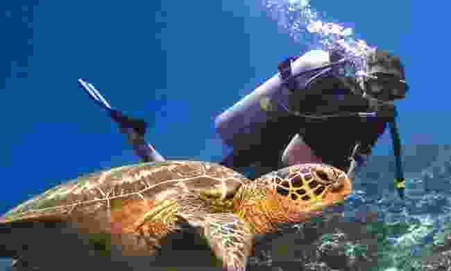 Diving among turtles in Sipadan, Borneo (Dreamstime)