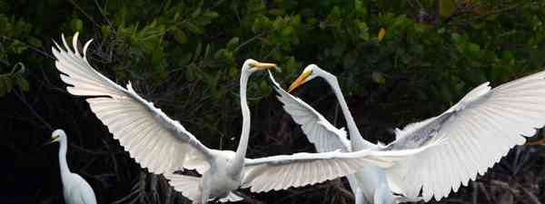 what wildlife is in Fort Myers Florida