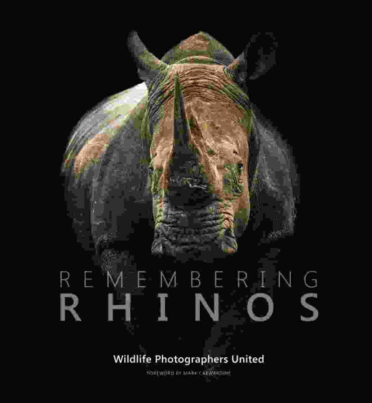 Southern white rhino, South Africa (Denise Eriksson)