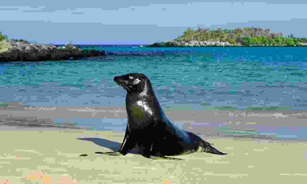 Sea lion on the Galápagos Islands (Sea Lion Travel)