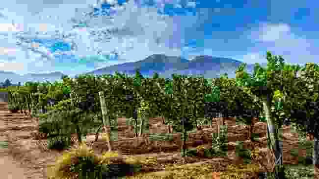 Embark on a wine trail (Shutterstock)