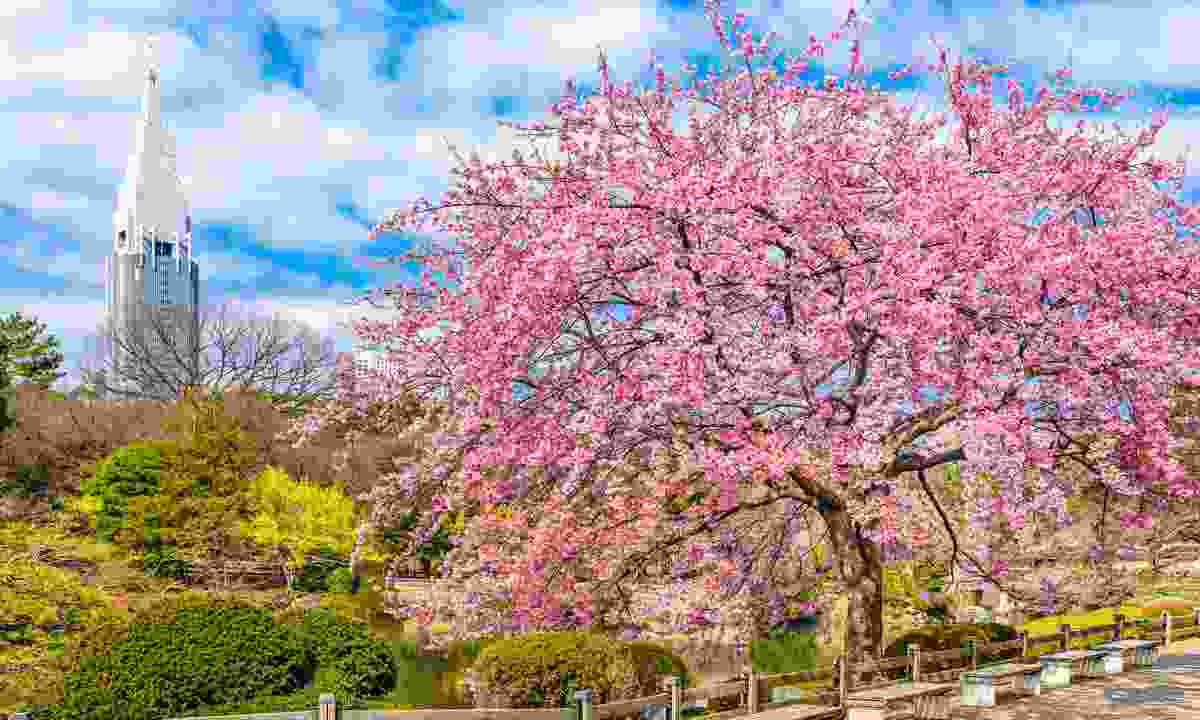 The peaceful Shinjuku-gyoen Park (Shutterstock)