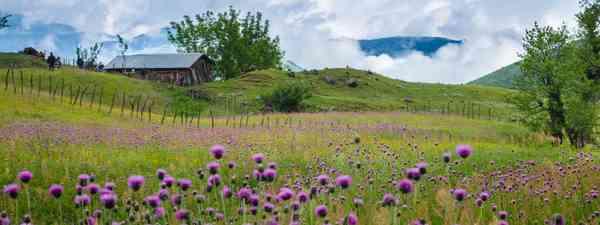 Spring meadows, Azerbaijan (Shutterstock)