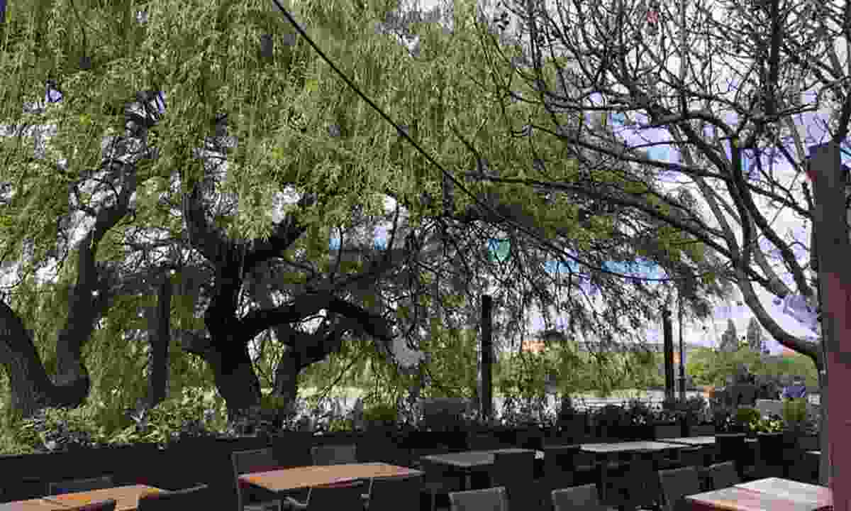 The shady pub garden of The Crabtree in Hammersmith (The Crabtree)