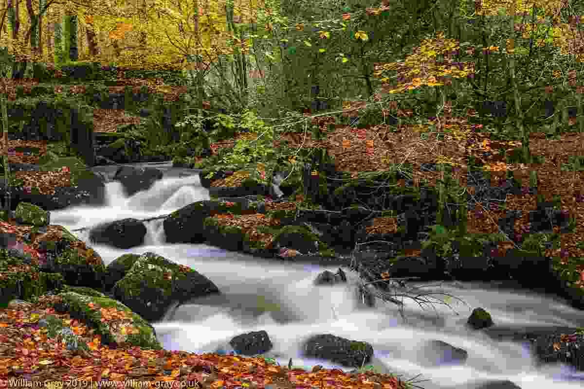 Kennack Vale autumn, Cornwall (William Gray)