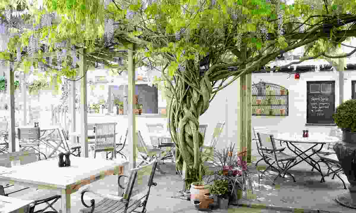 Take a seat under its beautiful wisteria tree (The Albion)