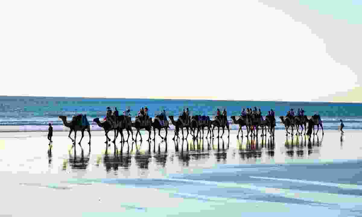 The ubiquitous camels on the beach in Western Australia's seaside town of Broome (Phoebe Smith)