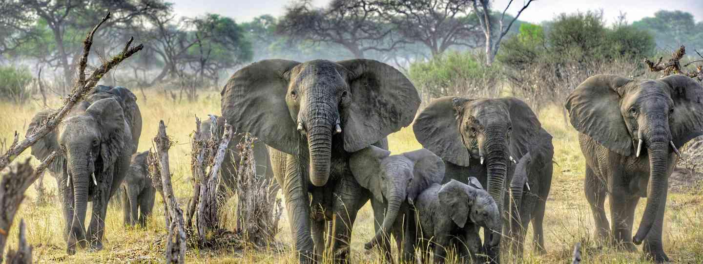 Elephants in Zimbabwe (Mark Eveleigh)