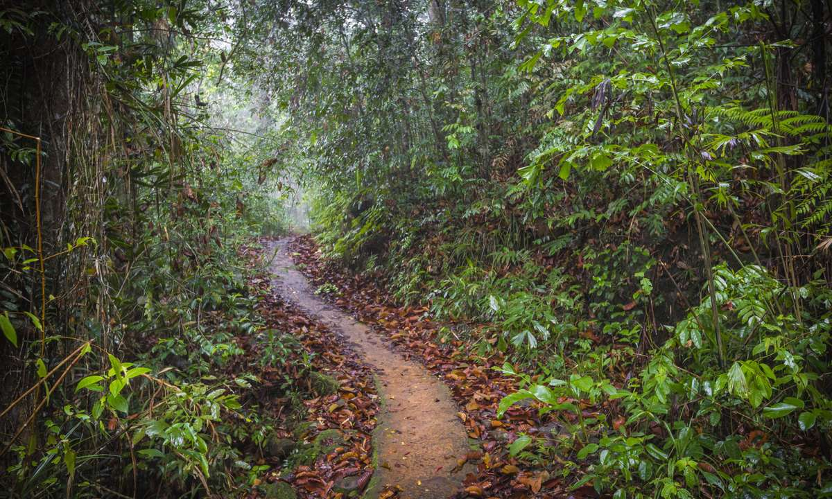 Sinharaja Rainforest (Dreamstime)