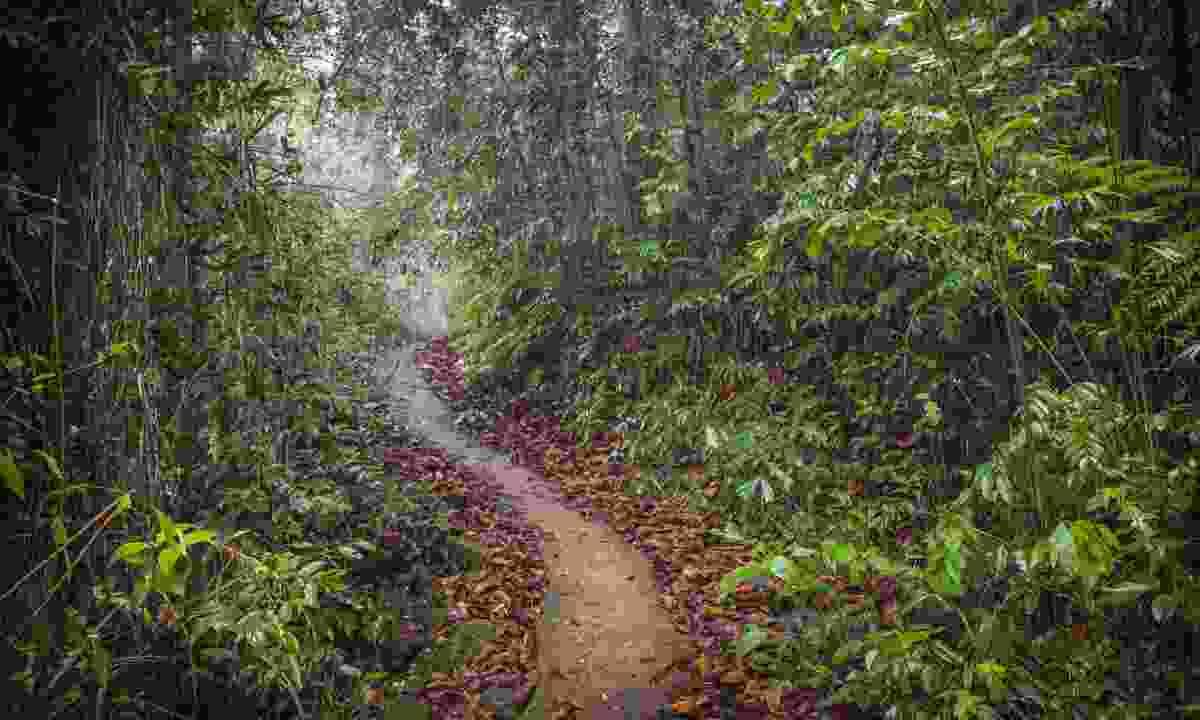 Sinharaja Rainforest (Dreamstime)