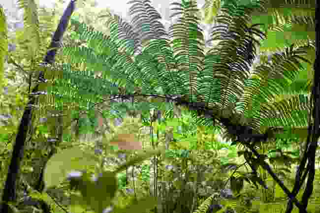 Cloud forest on Kosrae (Shutterstock)