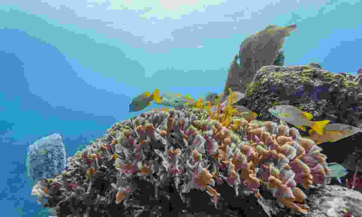 Marine life in Belize's Barrier Reef (Dreamstime)